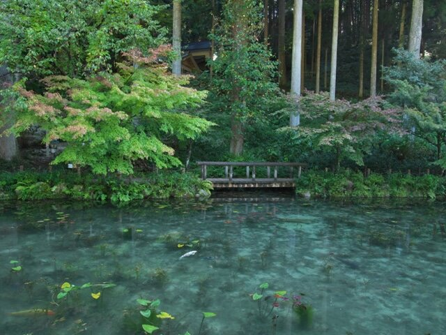 岐阜県 モネの池(福井旅1)(黒ラブと旅を再開します)
